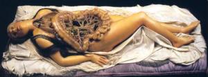 """Ceroplastica anatomica: """"[...] anche dentro la bellezza c'è quello che si mangia"""" (A.Sbarbati)"""
