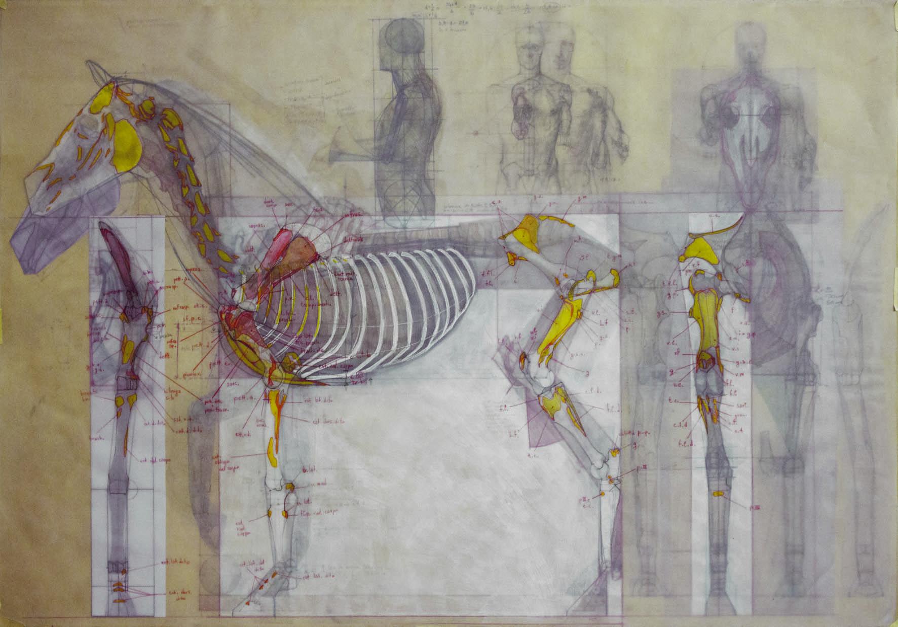 Tavola di anatomia artistica realizzata da Sara Tonello